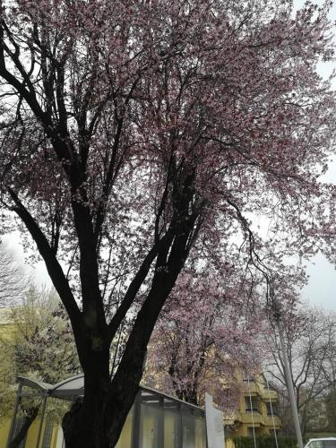 Magyar Tavasz a Délvidék Házban